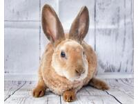 Mini rex available now