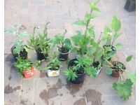 Joblot of 10x plants