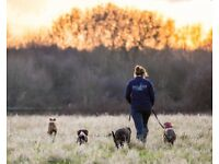 Dog Walker based in Northolt but cover Hayes, Ruislip, Uxbridge, Ickenham, Denham, Rickmansworth etc