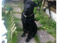 Marley is a year old am moving abroad so need to find him a new home