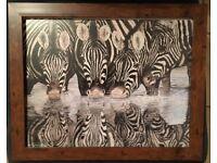 Zebra Reflection - Framed print in a 16 x 13 inch frame