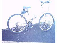 ladies new mountain bike look