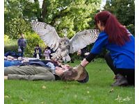 Entertainer and Falconer Part Time Posiotion