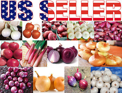 Organically Grown 18 Varieties Italian Onion Seed Heirloom Non Gmo Rare Sweet Us