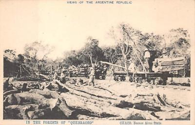 IN THE FOREST OF QUEBRACHO CHACO BUENOS AIRES ARGENTINA LOGGING POSTCARD c.1907 for sale  Shipping to Canada