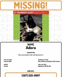 Lost Cat - Nobleford