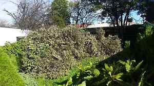 Free mulch Corio Geelong City Preview