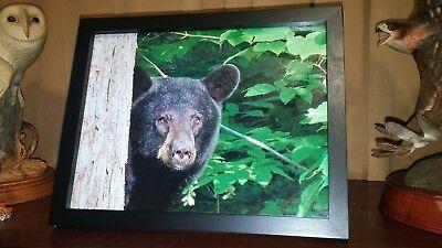 BLACK BEAR Photo Print Maple Tree Bear 8-1/2