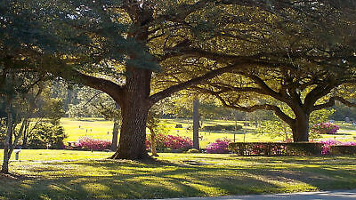 4 Cemetery Plots Beaumont, Texas