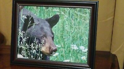 BLACK BEAR Photo Print Bear Meadow 8-1/2