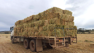 Oaten hay squares - modbury area delivery friday 3/3 Modbury Tea Tree Gully Area Preview
