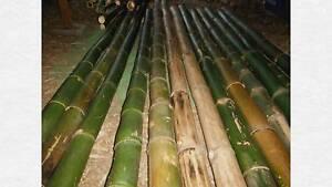 Extra Large Daimeter Bamboo Poles Umina Beach Gosford Area Preview