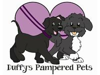 Dog walking & Cats and small furries visits available now. Duffy's Pampered Pets