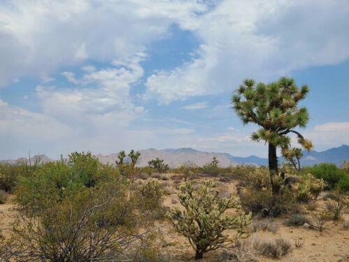 1.06 acre lot in Yucca, AZ (Lake Havasu Estates) - Cash or finance