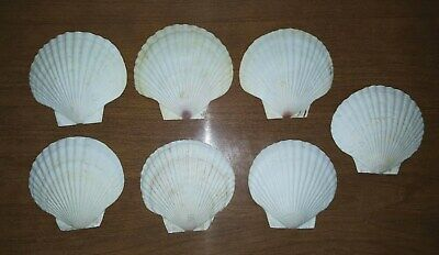 7 Vintage Natural Seashell Scallop Appetizer plate sea Shell Plates  - Seashell Plates