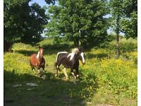 stables and grazing available