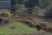 Horse Manure/Hay/Mulch/Compost - FREE FREE FREE Healesville Yarra Ranges Preview