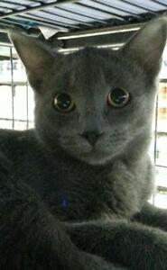 "Young Male Cat - Domestic Short Hair: ""Lurch"""
