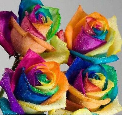 40Pcs Colorful Rainbow Rose Flower Seeds  Home Garden Plants - Rainbow Flower