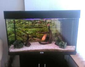 Juwel 125 Fish tank and stand full tropical set up