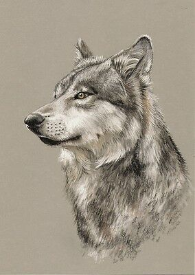 *    WOLF  *   A4  Limited  Print  #  205