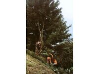 Tree Surgeon UUS