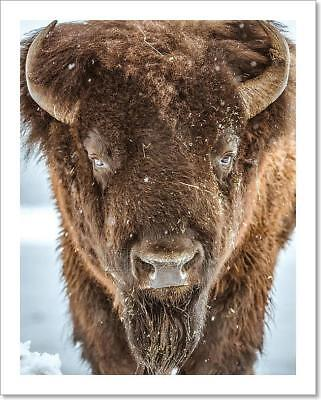 American Bison Portrait Art Print Home Decor Wall Art Poster - F
