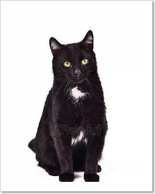 Black Cat Sitting Against White Art Print Home Decor Wall Art Poster - - Black Cat Decorations