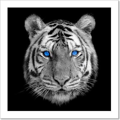 Black And White Tiger Art Print Home Decor Wall Art Poster - C