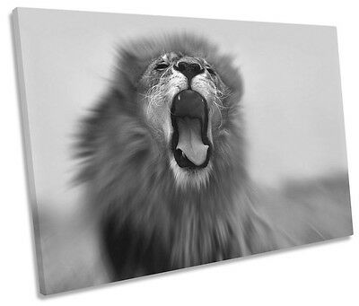 Lion Roar Safari B&W CANVAS WALL ART SINGLE Picture Print