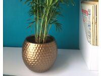 planter pot 12 cm x 13 cm( plant not included)