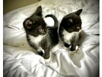 Cute kittens ready for a loving home
