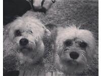 dog walker/pet sitter in Portobello Area, Edinburgh.