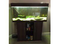 Juwel Rio 180 litre Aquarium