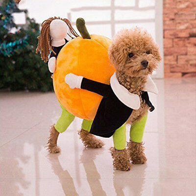 halloween funny pet dog clothes carrying pumpkin costume fancy puppy apparel ebay. Black Bedroom Furniture Sets. Home Design Ideas