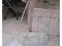 QUALITY SMALL SEED HAY BALES