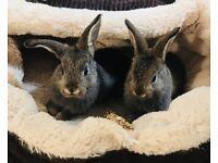 2 baby rabbits needing loving home