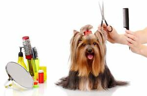 Grooming available weekdays Kallangur Pine Rivers Area Preview