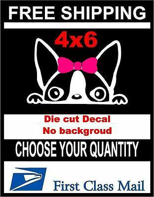 Peeking Dog Girl Boston Terrier,Vinyl Decal Sticker Car/Laptop/ Window White (Terrier Dog Vinyl Decal Sticker)