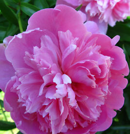 Peony Massage - (The Friendliest and Cheapest) - £45 for One Hour!