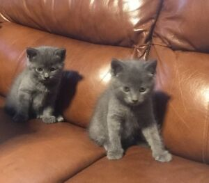 2 kittens left male and female