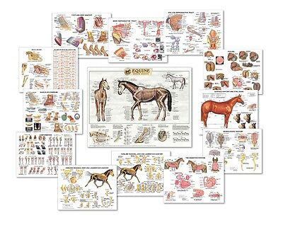 Equine Anatomy Chart Set Of 13 Charts  Lfa 2559x Special Offer