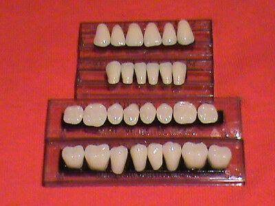 1 Complete Set Acrylic Antererior Posterior Denture Teeth Shade A3