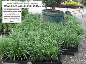 1000s of PLANTS FOR SALE - TERRIFIC FATHER'S DAY GIFT From $6.95 Mudgeeraba Gold Coast South Preview