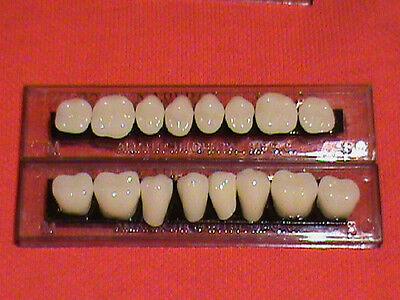 1 Set Acrylic Posterior Denturefalse Teeth  Shade A3 Size 22