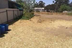 993 sqm allotment only $38-41k Mallala Mallala Area Preview