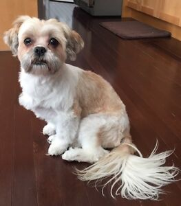 Looking to trade pet sitting services