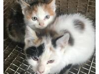 Two lovely kittens for sale