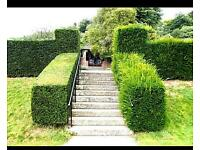 SNL hedge cutting & tree care specialist Pressure washing & garden waste service
