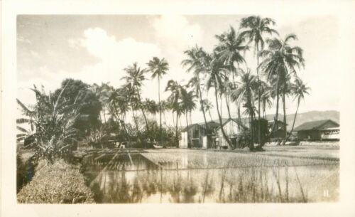 1940 Hawaiian homes and  rice fields Hawaii photo
